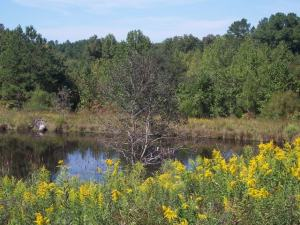 856acres_new_river