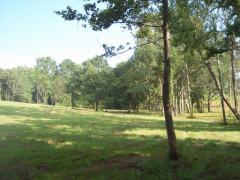 20 Acres Near Auburn