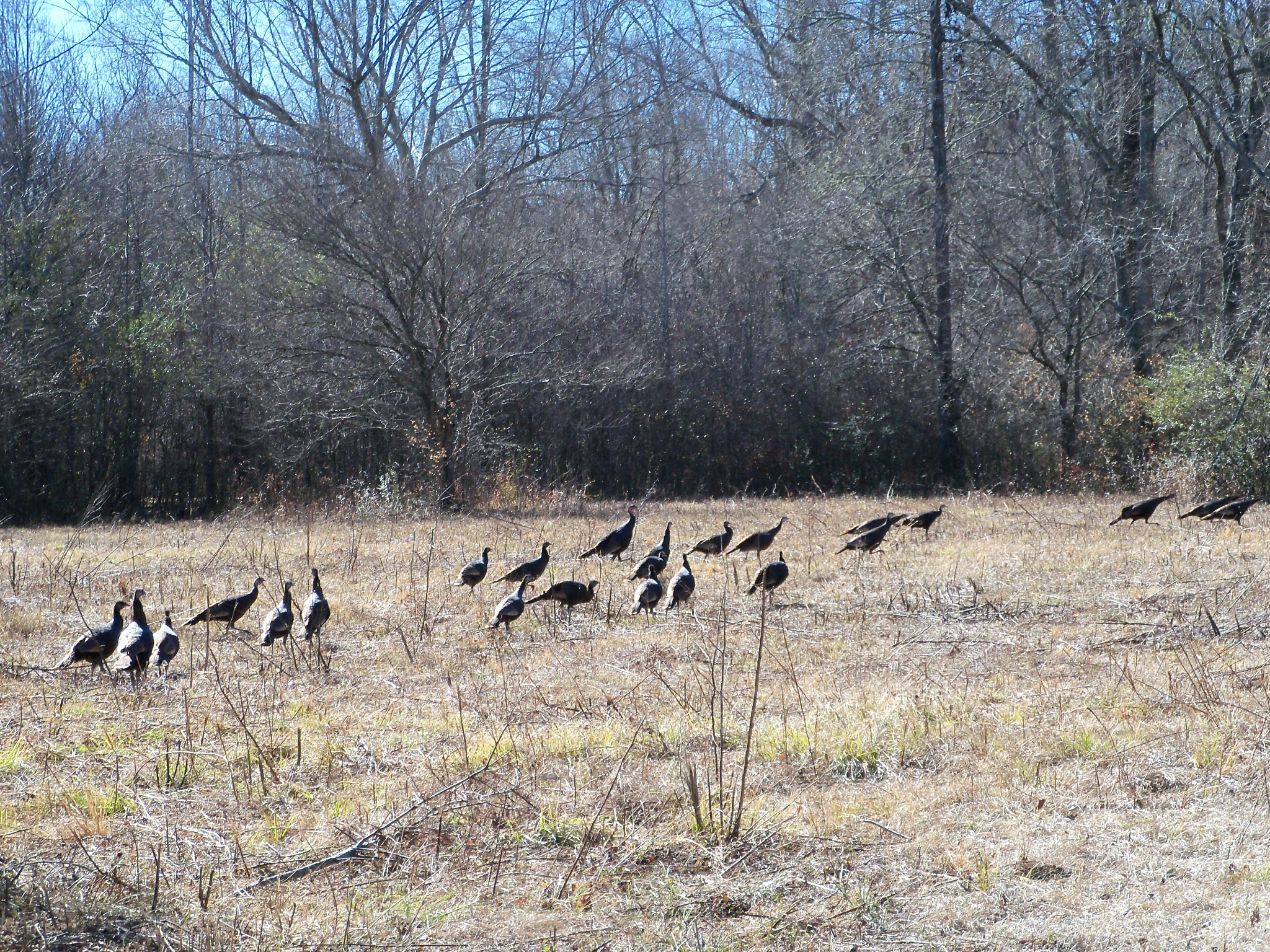 Farm For Sale in Coosa Countycoosa county