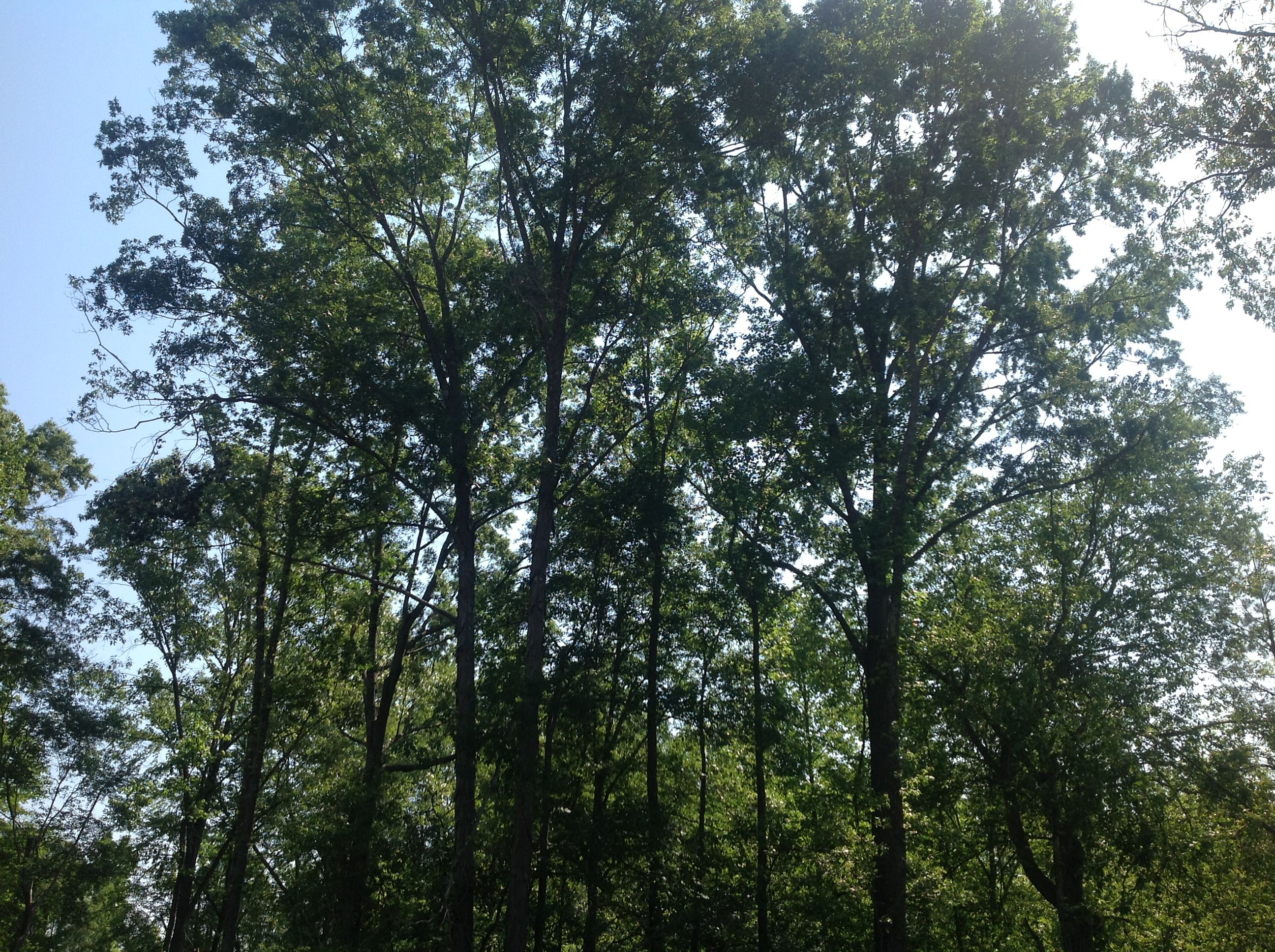 Land For Sale in Coosa County Alabama | The AlaLandMan Blog